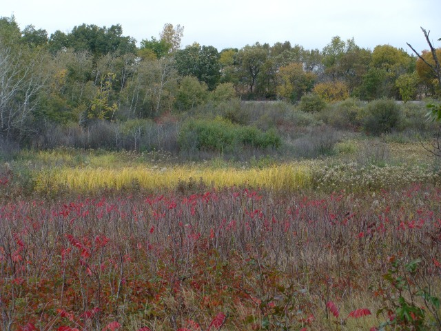 Sand prairie transitions into wet prairie, fen, and shrub thicket.