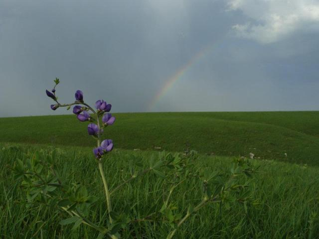 Flint Hills, KS tallgrass prairie in May.